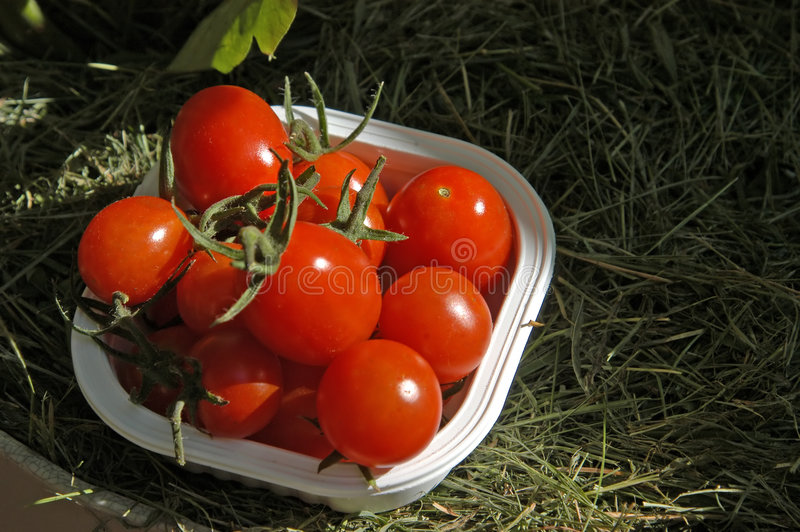 Download Veggies III foto de archivo. Imagen de ensaladas, cena - 181556