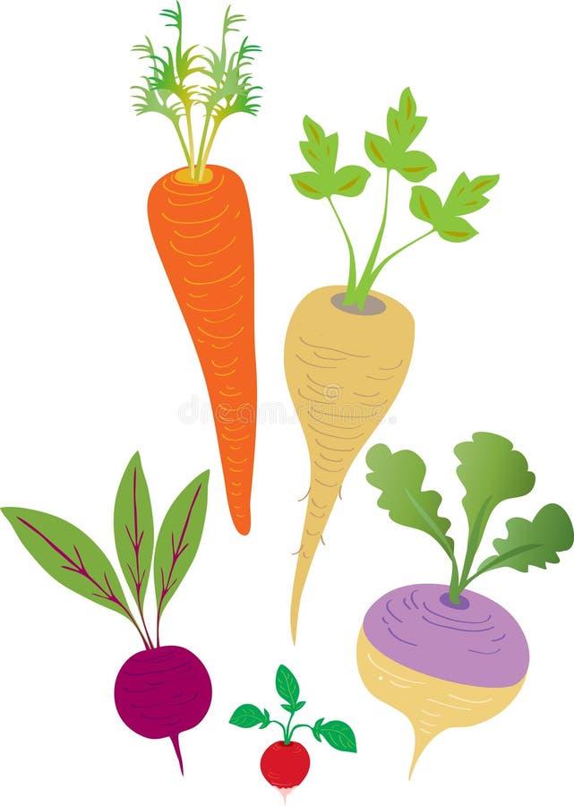 veggies korzeniowa zima royalty ilustracja