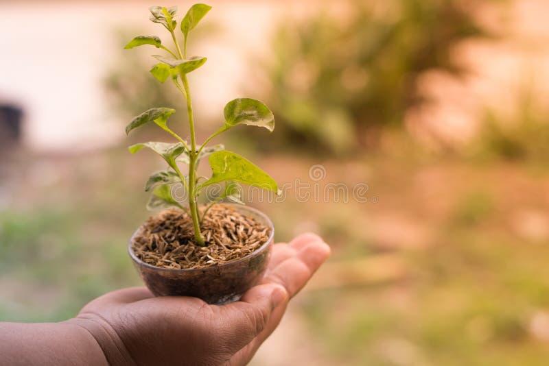 Veggies och frukter för handhålungt träd arkivbilder