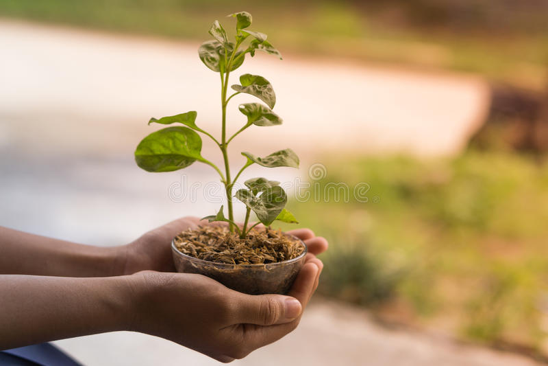 Veggies och frukter för handhålungt träd royaltyfri fotografi