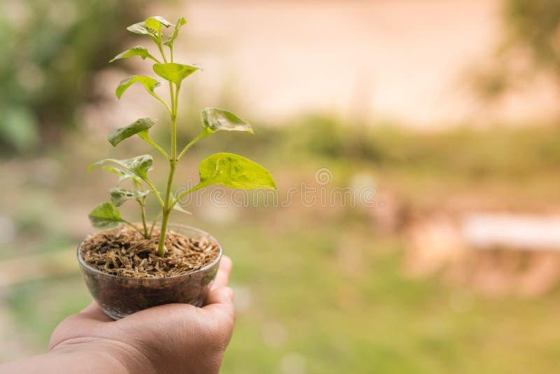 Veggies och frukter för handhålungt träd royaltyfria bilder