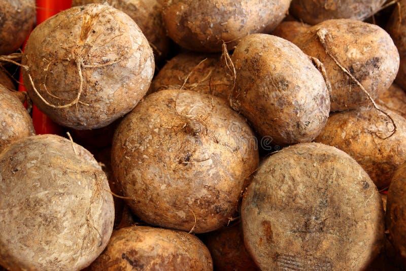 Vehículo mexicano del alimento de la haba de ñame de Jicama imagen de archivo