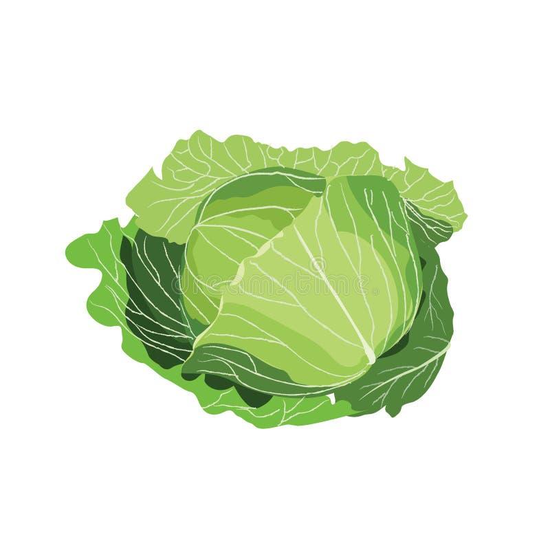 Vehículos de la col con las hojas ilustración del vector