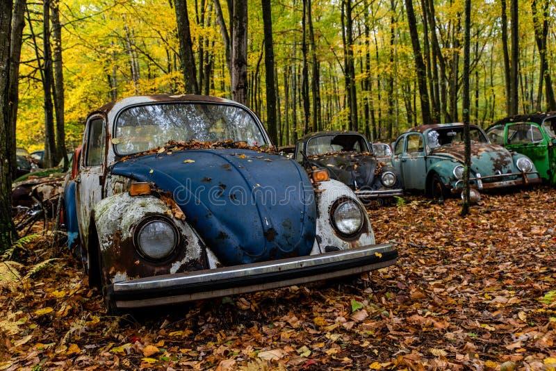 Vehículos de Volkswagen Antiguos Abandonados - Pennsylvania fotografía de archivo libre de regalías