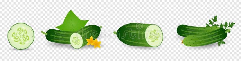 Veh?culos de los pepinos con las hojas y las flores Fije de la semilla del pepino, brote, flor, hojas, verdura Crecimiento vegeta stock de ilustración