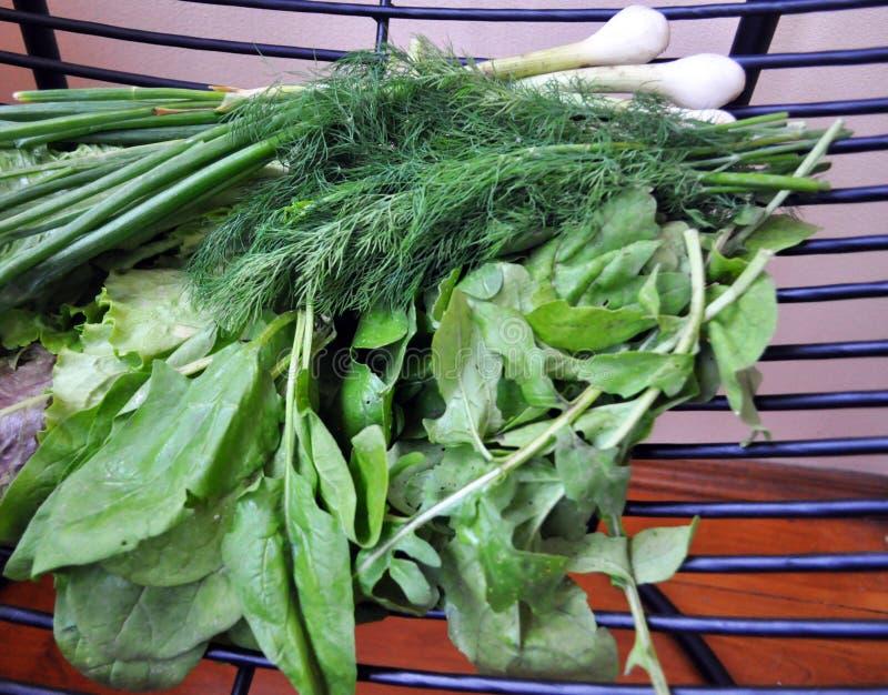 Veh?culos verdes Fije de diversas verduras verdes estacionales foto de archivo