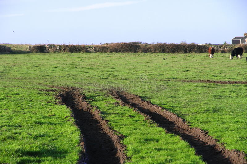 Vehicle Tracks in a Field royalty free stock photos