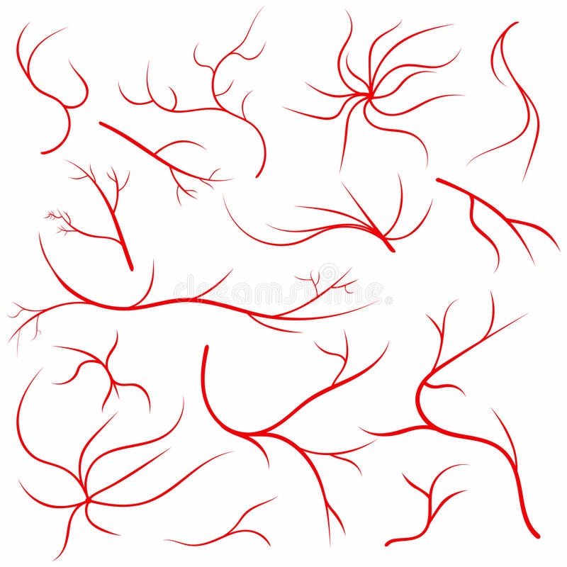 Veias do olho Embarcações do olho humano, artérias do sangue ajustadas Sistema médico das artérias da veia do globo ocular ilustração do vetor