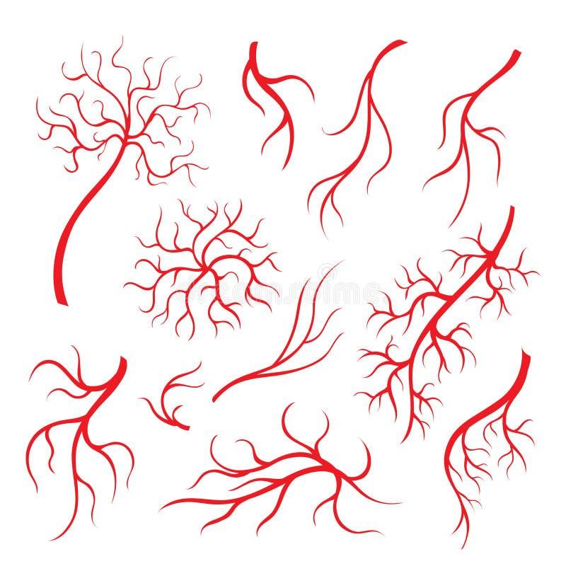 Veias do olho humano ou embarcação, capilares vermelhos, grupo isolado artérias do sangue ilustração royalty free