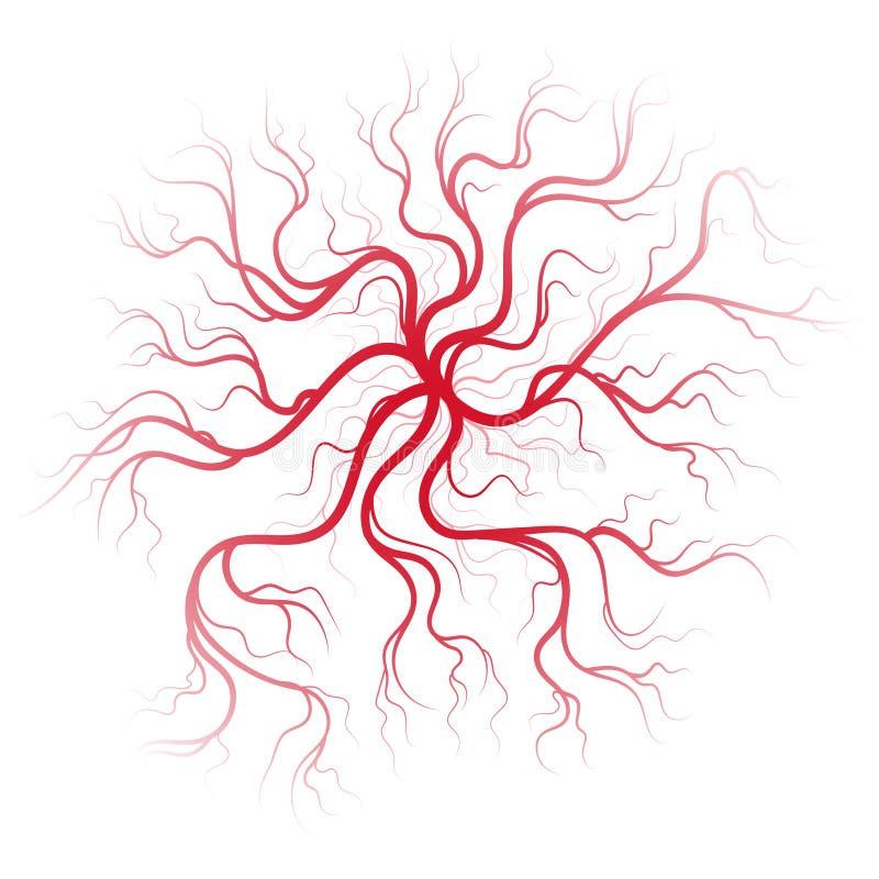 Veias do sangue humano ilustração stock