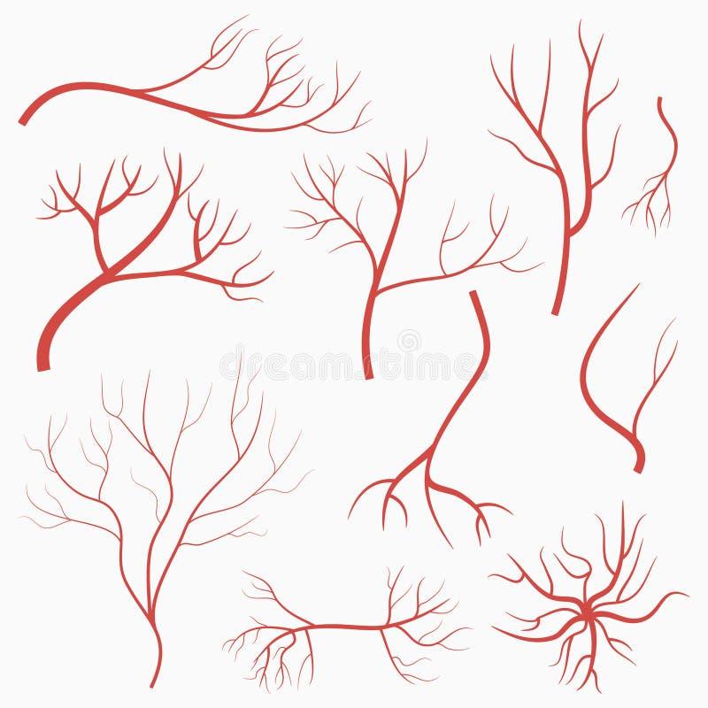 Veias e artérias do olho Grupo de embarcações vermelhas Elementos do sistema do sangue humano Vetor ilustração stock