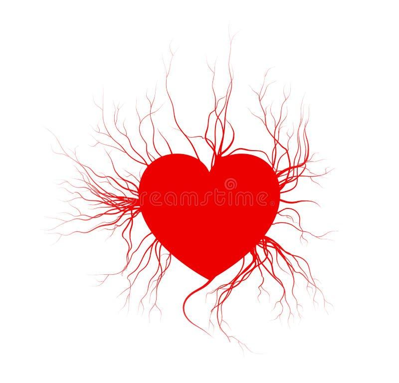 Veias humanas com coração, projeto vermelho do Valentim dos vasos sanguíneos do amor Ilustração do vetor no fundo branco ilustração royalty free