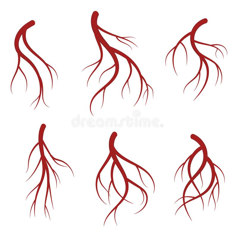 Veias humanas, ilustração médica do vetor realístico vermelho dos vasos sanguíneos ilustração stock