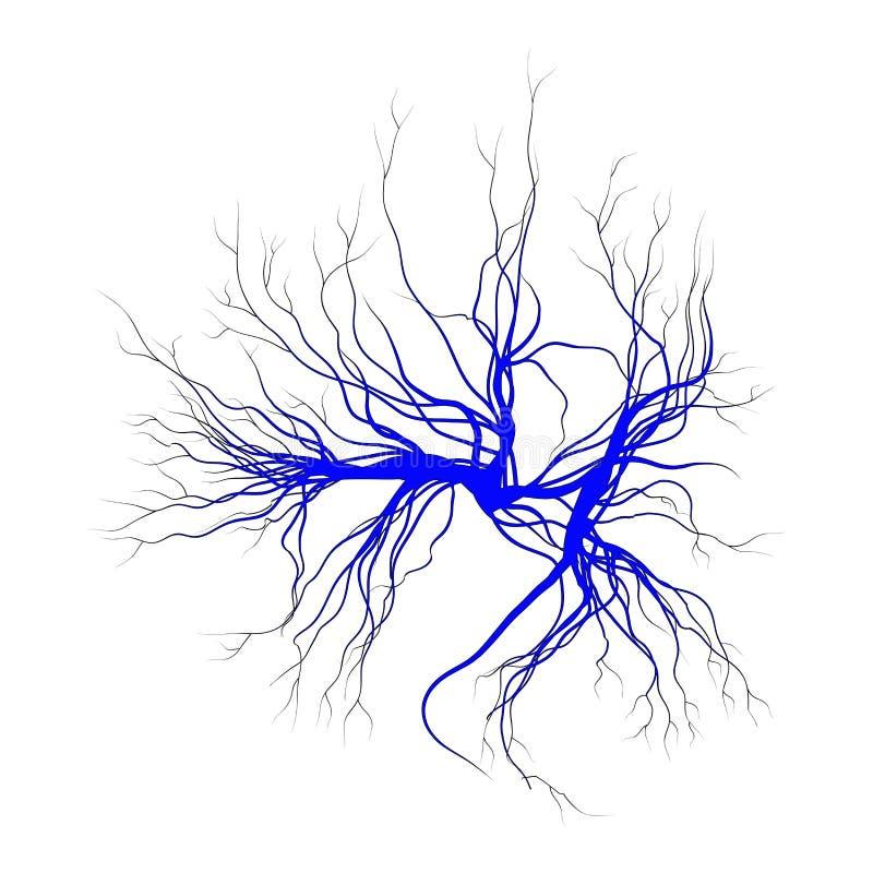 Veias humanas, projeto vermelho dos vasos sanguíneos Ilustração do vetor isolada no fundo branco ilustração stock