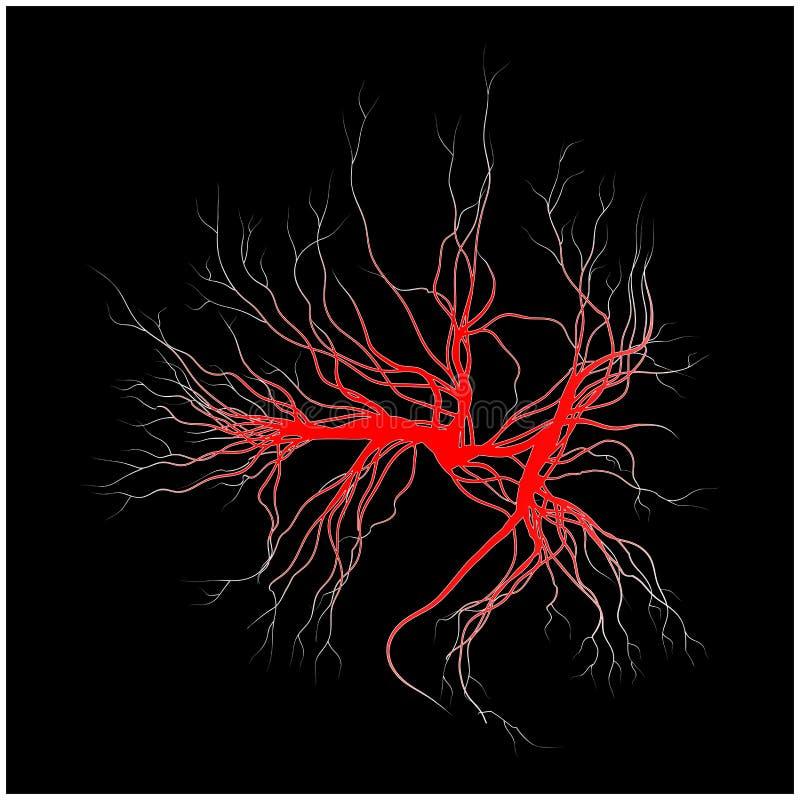 Veias humanas, projeto vermelho dos vasos sanguíneos Ilustração do vetor no fundo branco ilustração stock