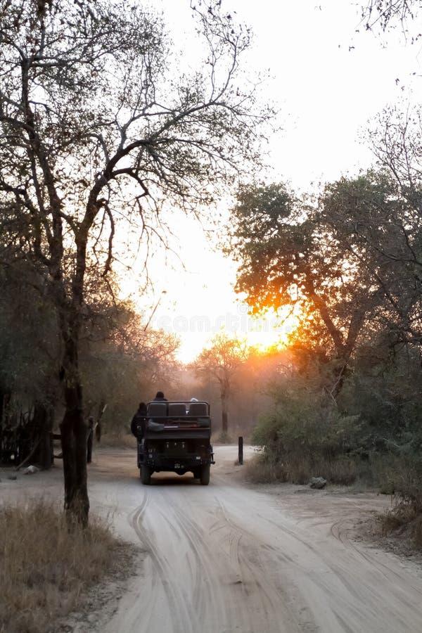 veicolo di safari 4x4 su un azionamento del gioco di alba di mattina fotografia stock libera da diritti