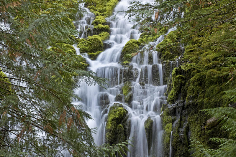 Veil of the Upper Proxy Falls Oregon. The water veil of Upper Proxy Falls in Central Oregon royalty free stock image