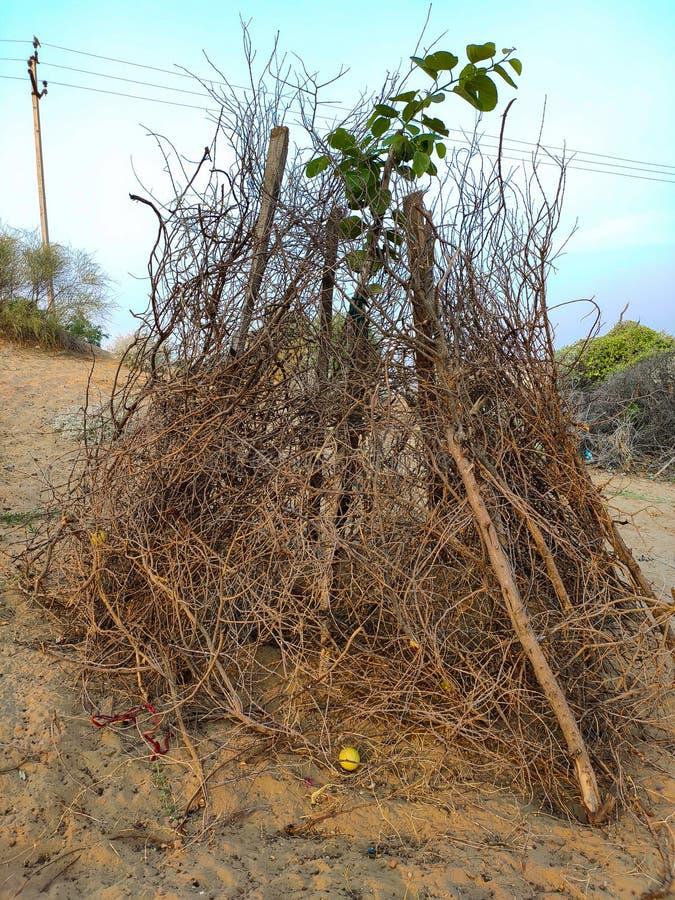 Veiligheidsschild ter bescherming van kleine bomen stock foto