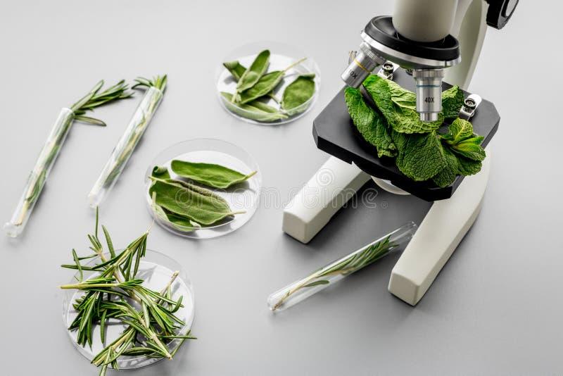 Veiligheidsvoedsel Laboratorium voor voedselanalyse Kruiden, greens onder microscoop op grijze hoogste mening als achtergrond royalty-vrije stock afbeeldingen