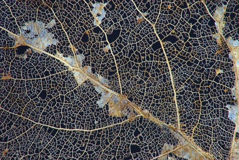 Veinen van dode bladeren stock afbeeldingen