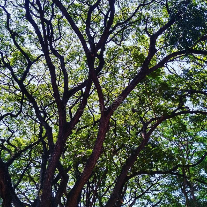 Veines d'arbre image libre de droits