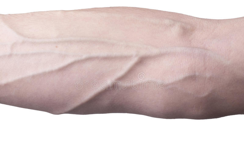 Veins on an arm. Male arm with visible veins stock photography