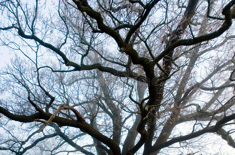 The Veins of Tree Branches stock photos