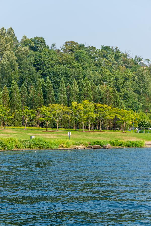 Trees At Coulon Park royalty free stock photos