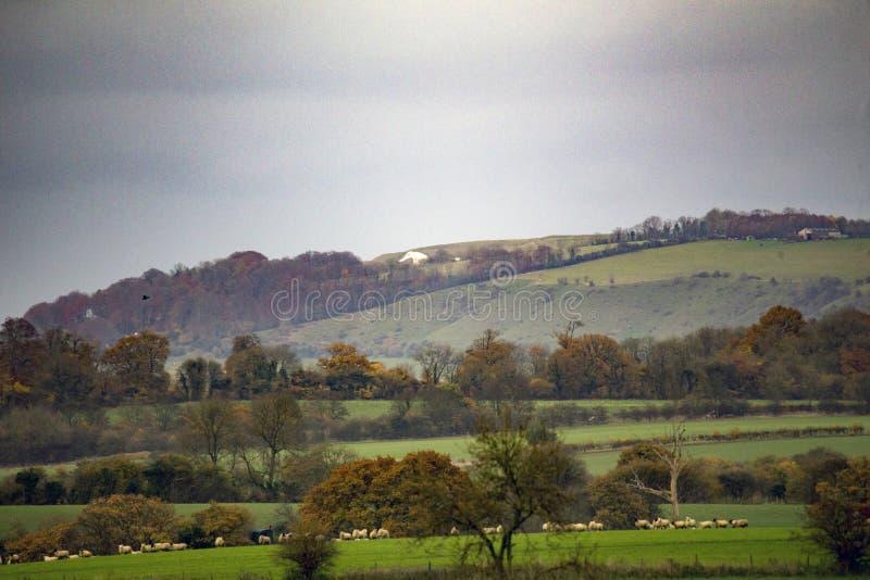 Veja o campo de Wiltshire dos acros com o cavalo branco de Westbury apenas visível imagem de stock royalty free