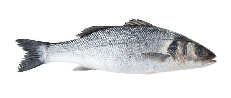 Veja peixes baixos fotos de stock royalty free