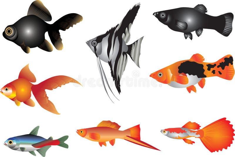 Vektor - akvariefisksötvatten stock illustrationer