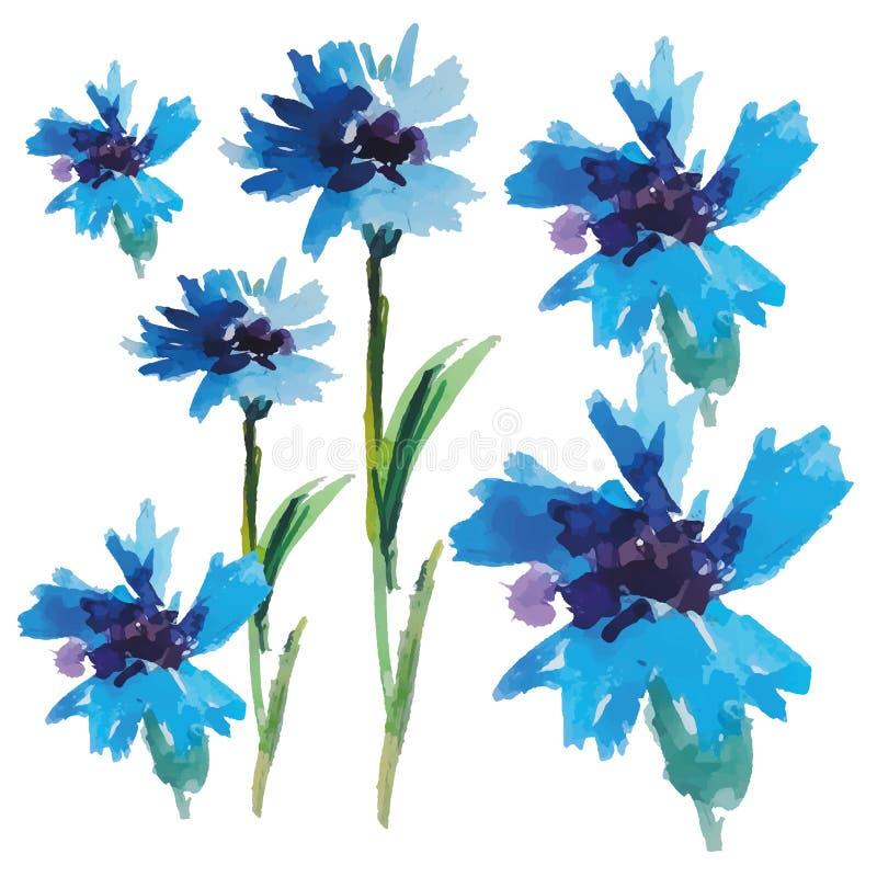 Vektor-blaue Aquarell-Kornblumen stockfotos
