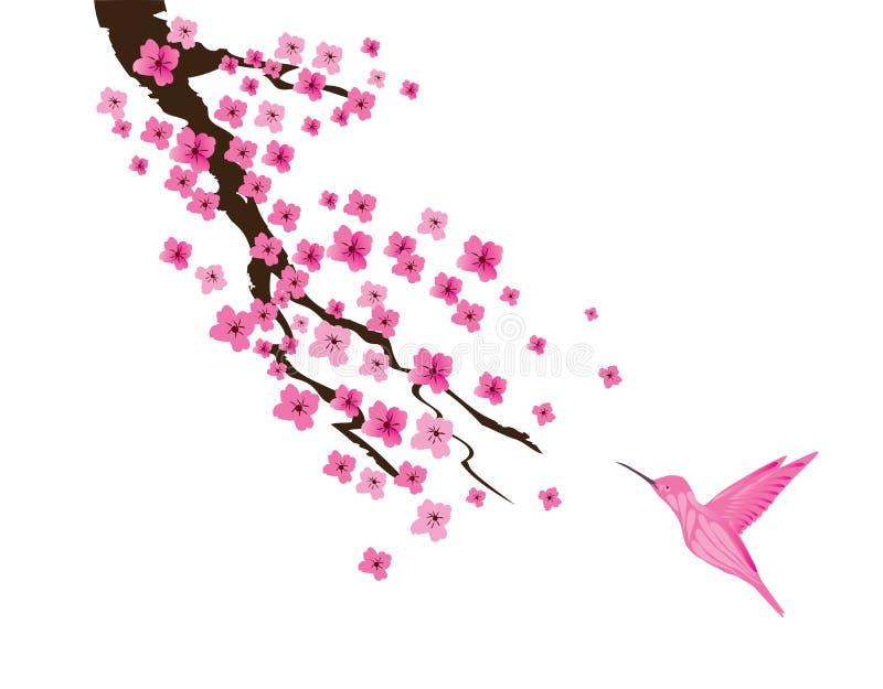 Vektor Cherry Blossom And Pink Hummingbird royaltyfri illustrationer
