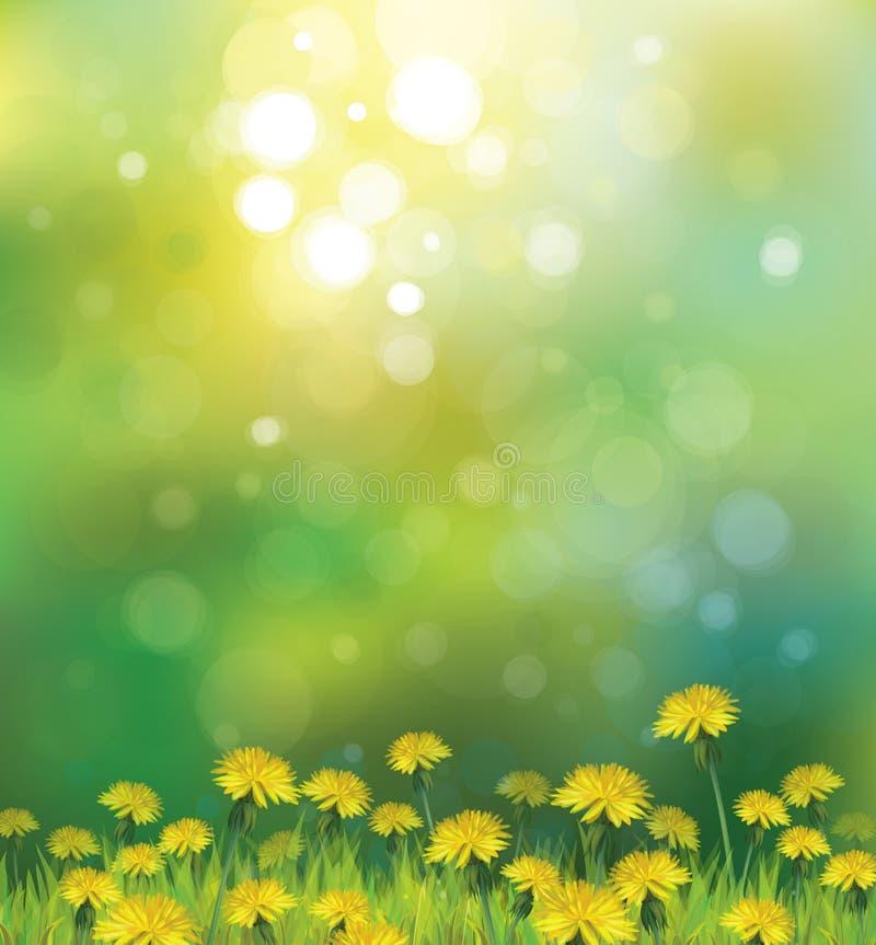 Vektor des Frühlingshintergrundes mit gelbem Löwenzahn lizenzfreie abbildung