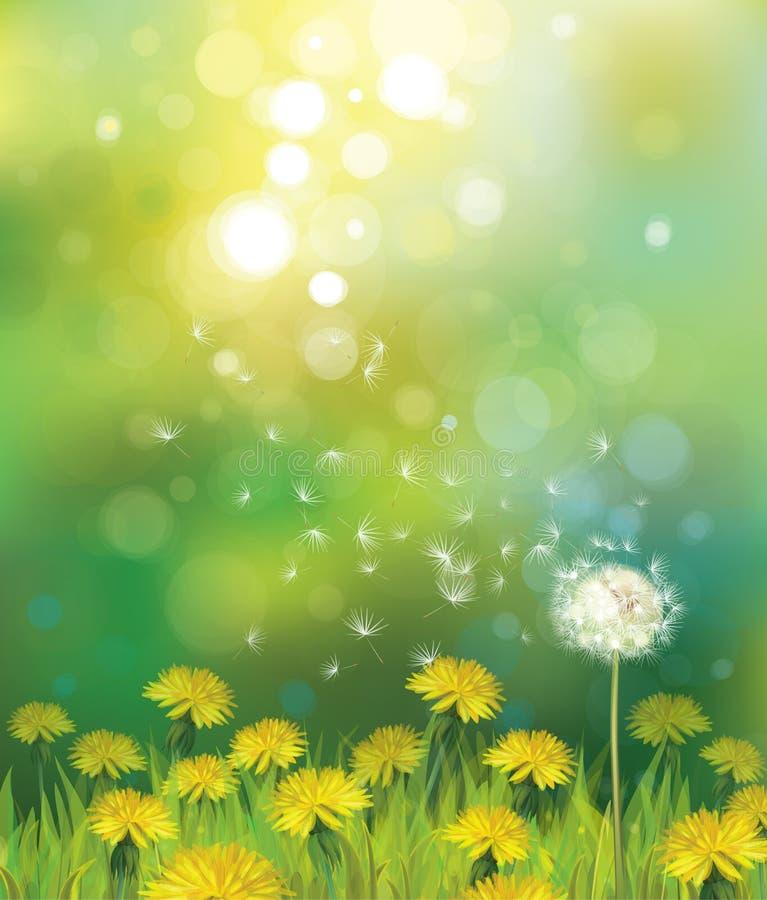 Vektor des Frühlingshintergrundes mit Löwenzahn. lizenzfreie abbildung