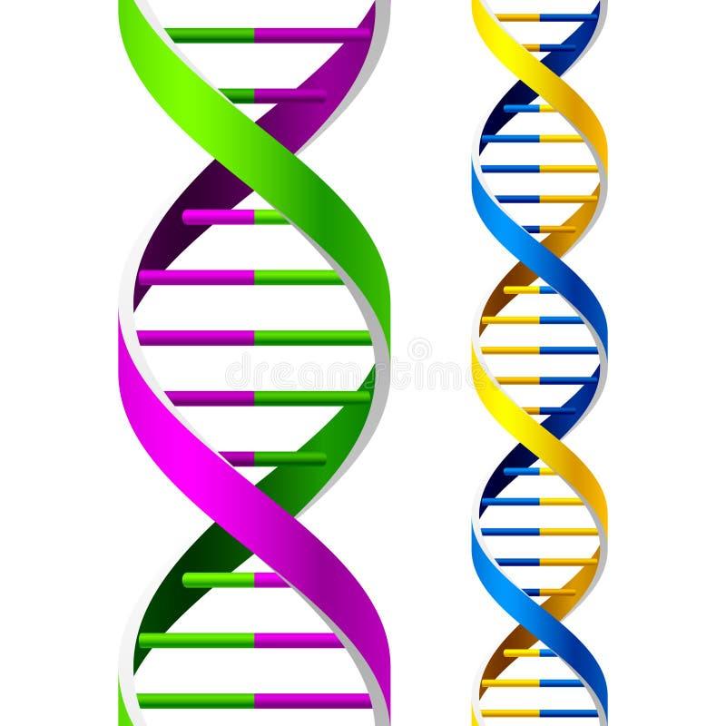 Vektor-DNA-Stränge lizenzfreie abbildung