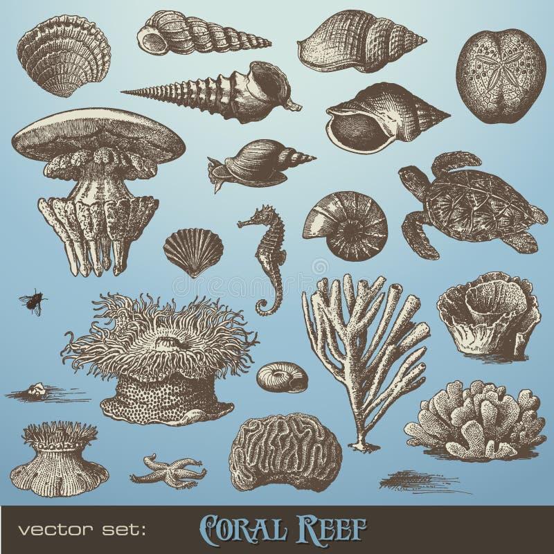 Vektor eingestellt: Korallenriff vektor abbildung