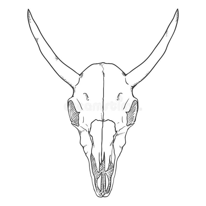 Vektor-einzelne Skizzen-Illustration - Schädel der Kuh Front View lizenzfreie abbildung