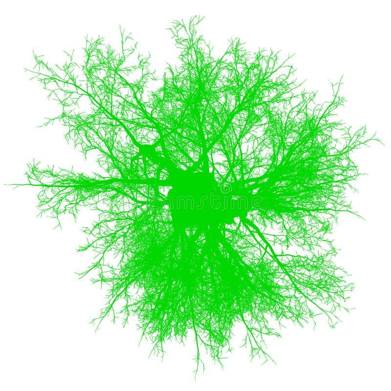 Vektor för bästa sikt för träd avlövad isolerad - gräsplan - kontur vektor illustrationer