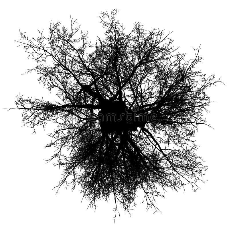 Vektor för bästa sikt för träd avlövad isolerad - svart - kontur royaltyfri illustrationer