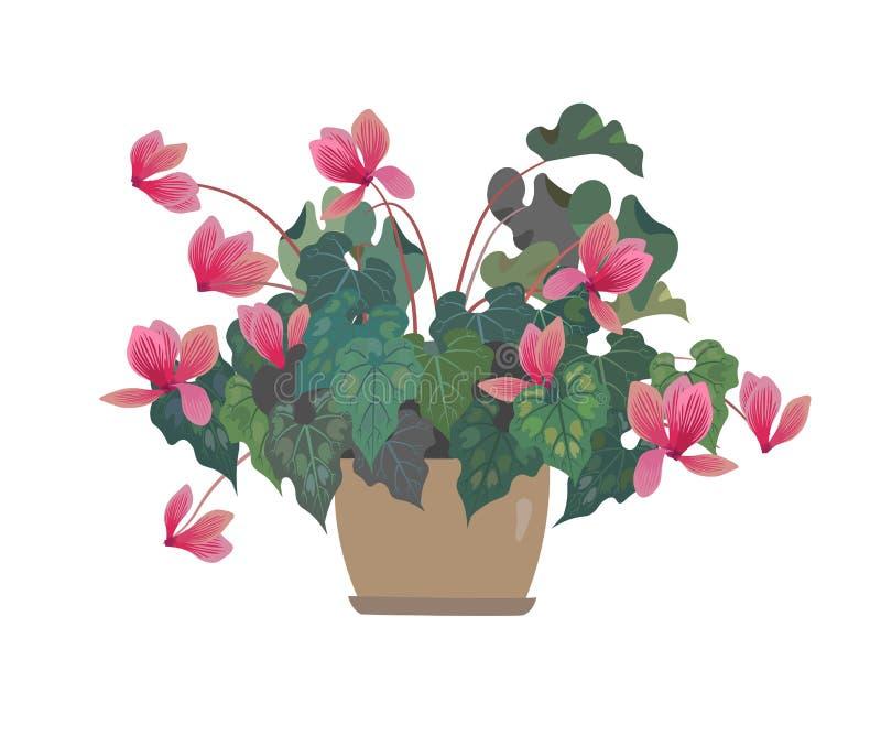 vektor för blommaillustrationkruka cyclamen pinken backfround blommar home isolerat över white stock illustrationer