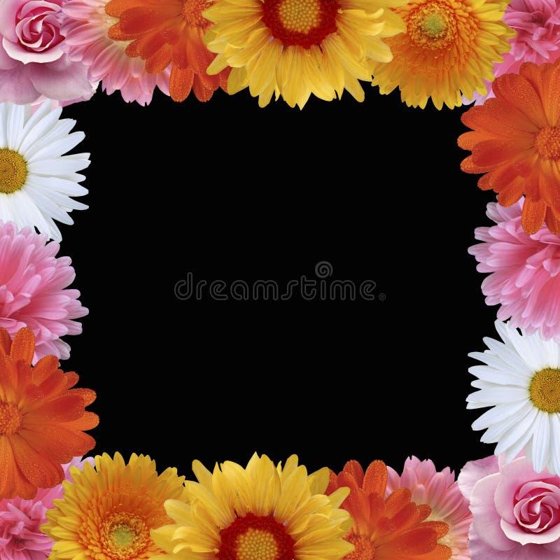 vektor för blommaramsommar stock illustrationer
