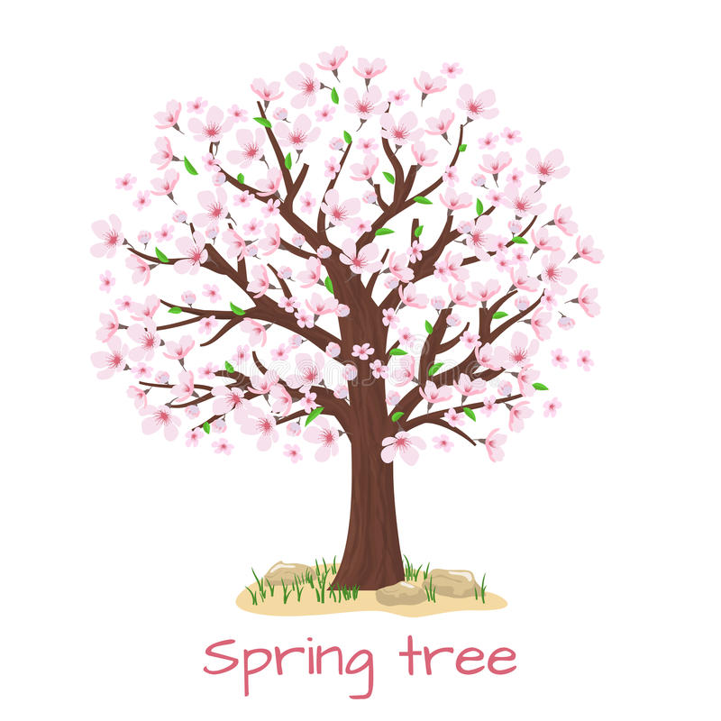 Vektor för körsbärsrött träd för vårblomning royaltyfri illustrationer