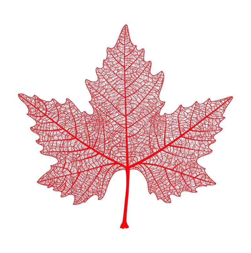 vektor för red för diagramleaflönn Kanada symbol Höst också vektor för coreldrawillustration vektor illustrationer