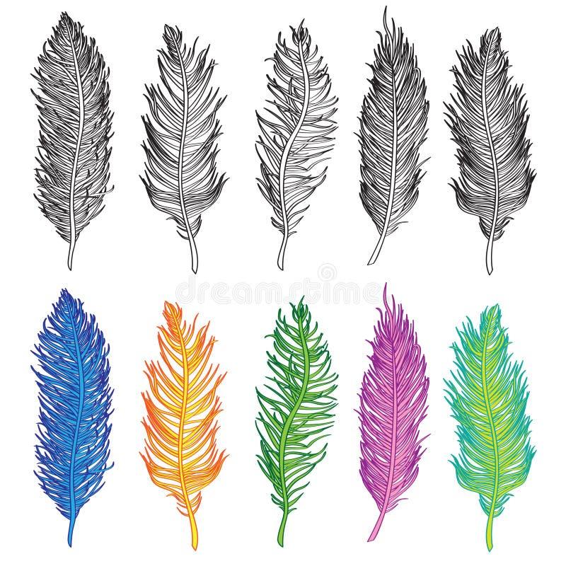 Vektor för uppsättning för illustration för fågelfjäder royaltyfria foton