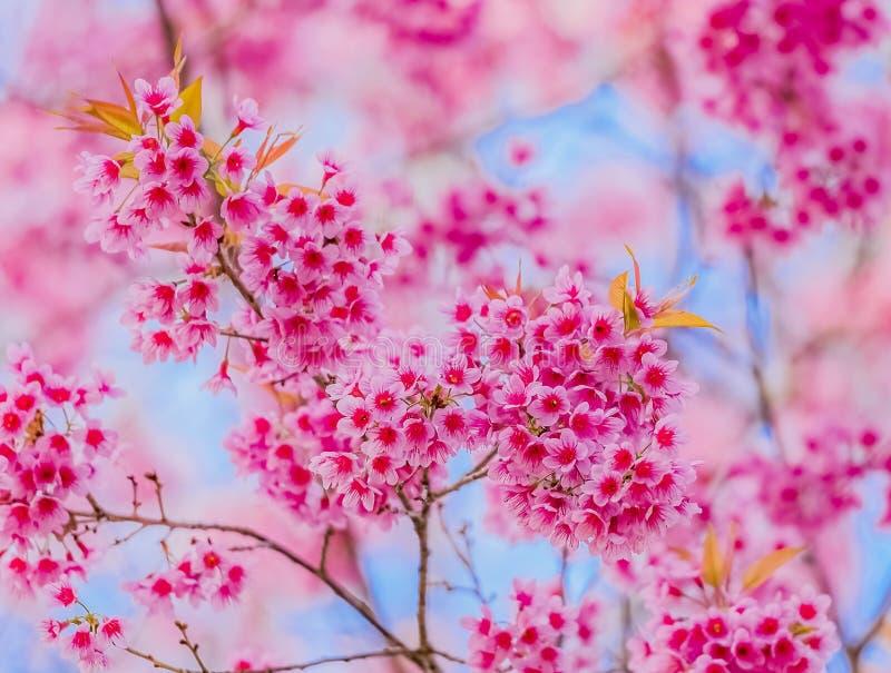 vektor för valentin för pardagillustration älska Härliga blommande rosa färgblommor royaltyfria foton