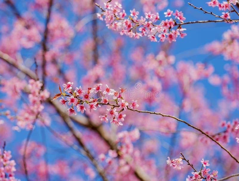 vektor för valentin för pardagillustration älska Härliga blommande rosa färgblommor royaltyfri bild