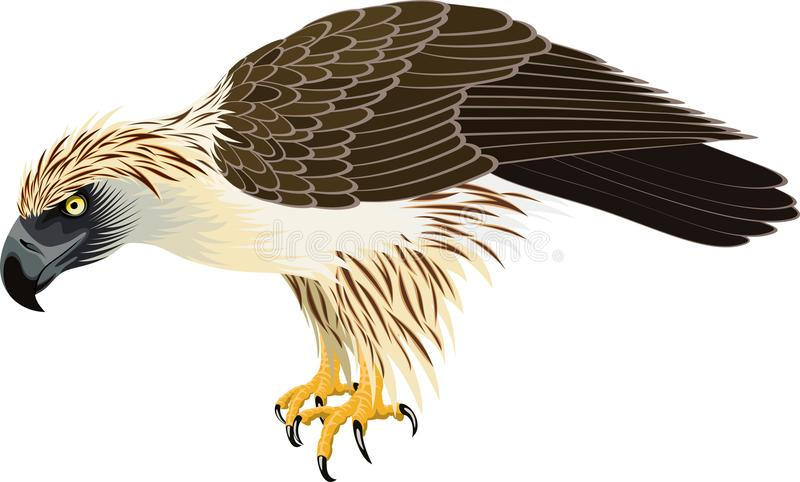 Vektor filippinsk Eagle - Pithecophaga jefferyil stock illustrationer