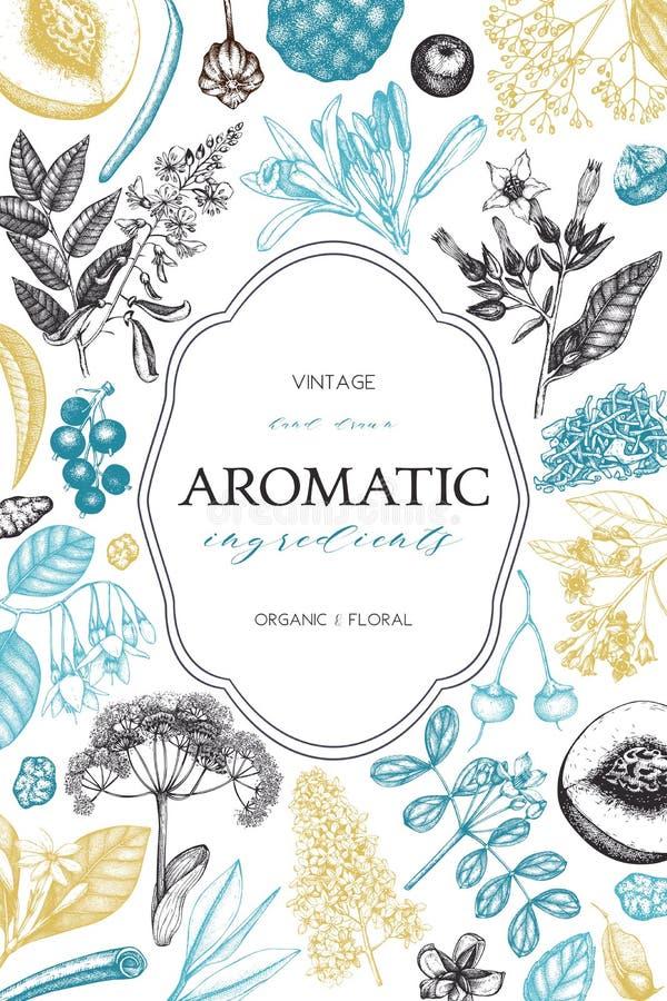 Vektor-Handgezogene Parfümerie und Kosmetikbestandteilillustration Aromatischer und Heilpflanzeentwurf Gold lable lizenzfreie abbildung