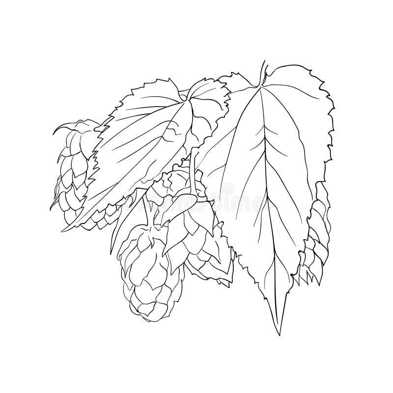 Vektor-Hopfenbetriebsskizze, umreißen die einzelne schwarze lokalisierte Zeichnung lizenzfreie abbildung